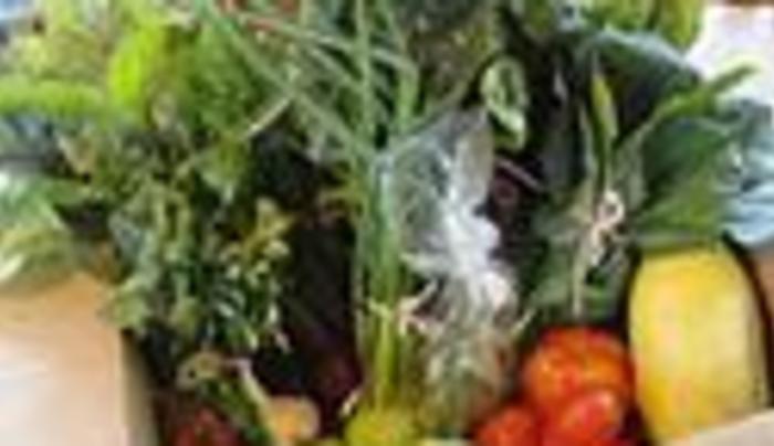 root n roost farm