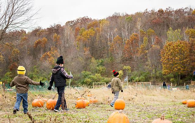 Children walking through a pumpkin patch