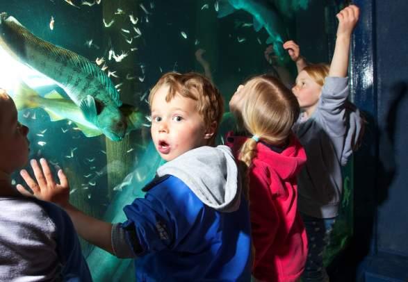 Risør Akvarium