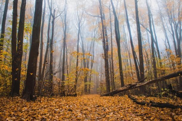 Hike through fall leaves