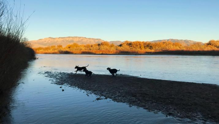 Dogs at River