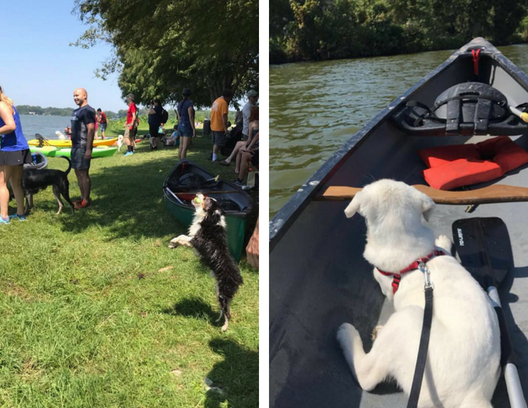 Pets N Paddling Fundraiser