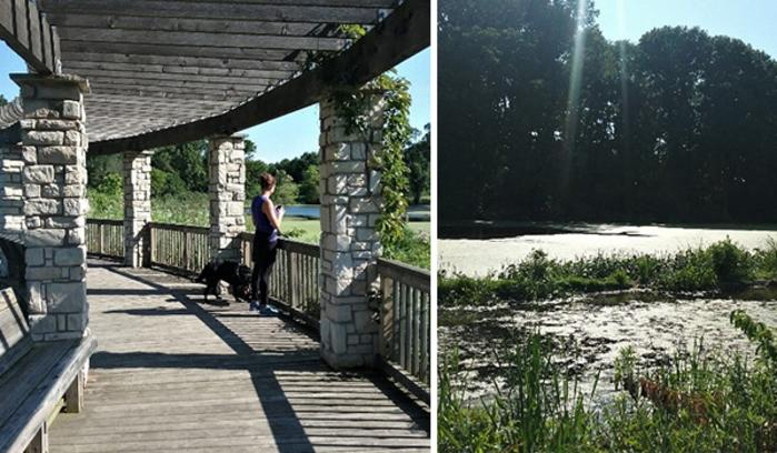Gabis Arboretum Savannah Wetlands by Katharine Stob