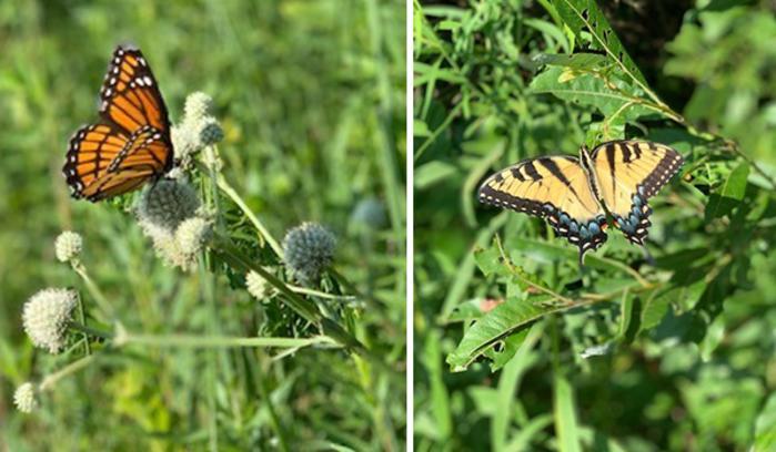 Gabis Arboretum butterflies by Katharine Stob