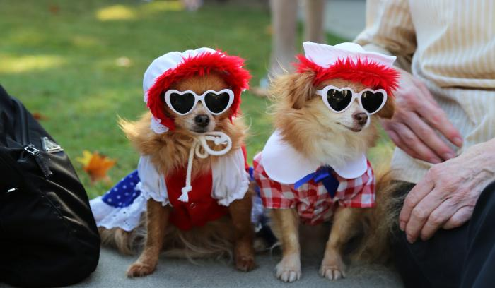 Dogs in Costume at Festival Pet Parade in Sandy Springs
