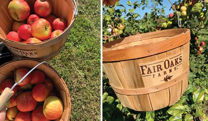 Fair Oaks Farm Orchard apples and buckets