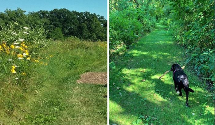 Gabis Arboretum Bluebird Trail with dog by Katharine Stob