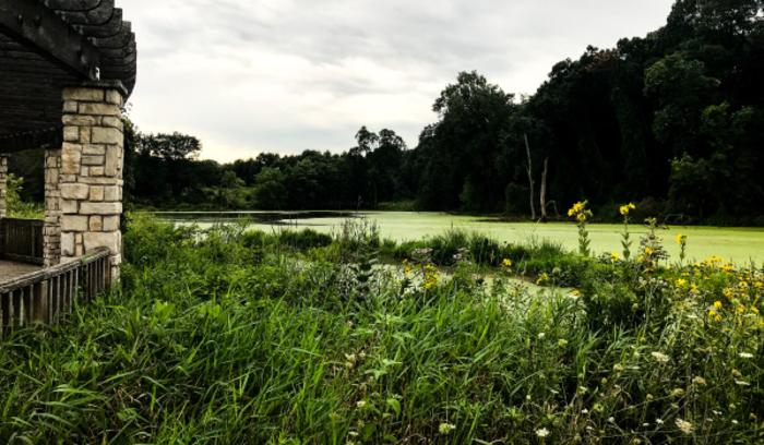 Gabis Arboretum Savanna Wetland - Carolyn Hricik