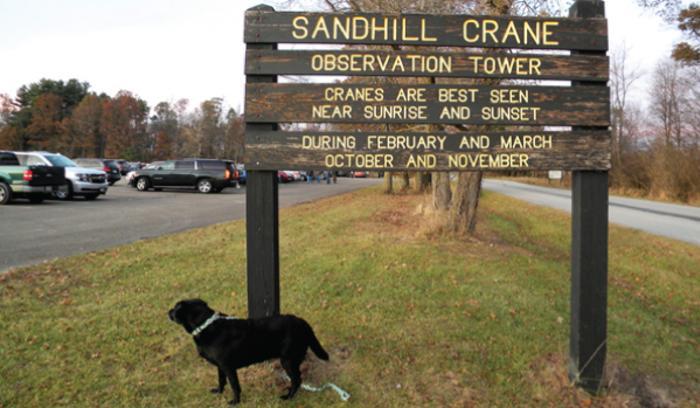 Jasper Pulaski Sandhill Crane sign - Katherine Stob