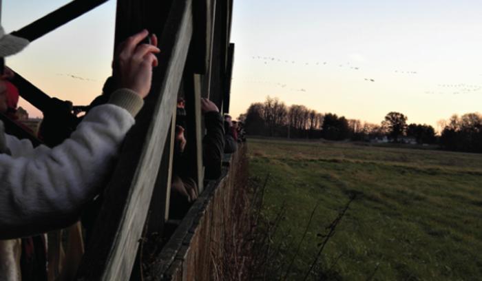 Jasper Pulaski Sandhill Crane viewing - Katherine Stob