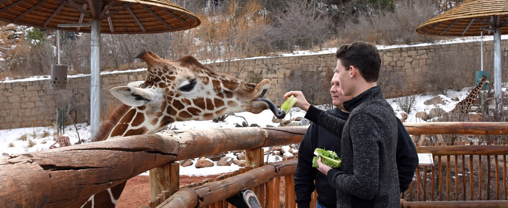 Couple feeding a giraffe at the Cheyenne Mountain Zoo