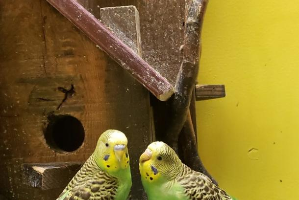 Fun things to do at Blue Zoo: Touch and feed the birds in the Bird Room