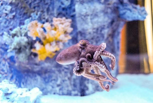 Fun things to do at Blue Zoo: Octopus!