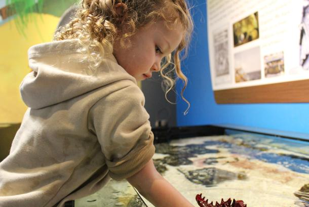 Fun things to do at Blue Zoo: Starfish Touch Tank