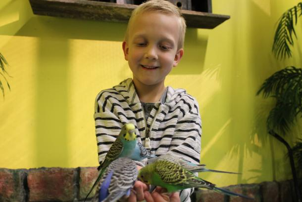 Fun things to do at Blue Zoo: Bird Room