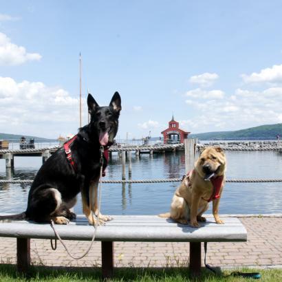 Dogs at Seneca Lake