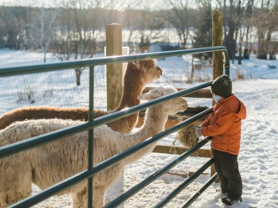 Pauley Alpaca Company | Credit AB-Photography.us