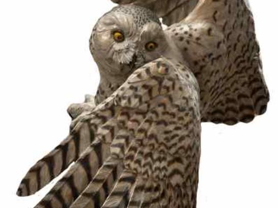 Snowy Owl - Bronze - Jim Green