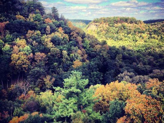 Fall Foliage   credit Joe Whitson