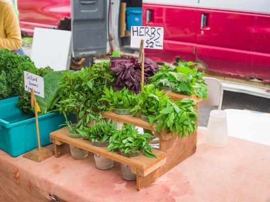A variety of herbs | credit choochoo-ca-chew