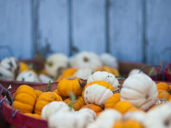 Pick your own pumpkins, fresh out of the patch | credit AB-PHOTOGRAPHY.US