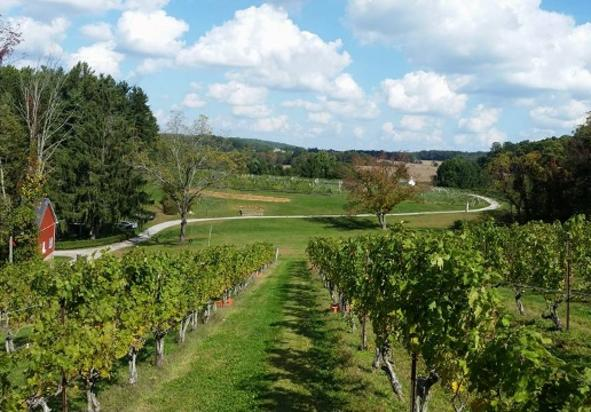 Balla Cloice Vineyard