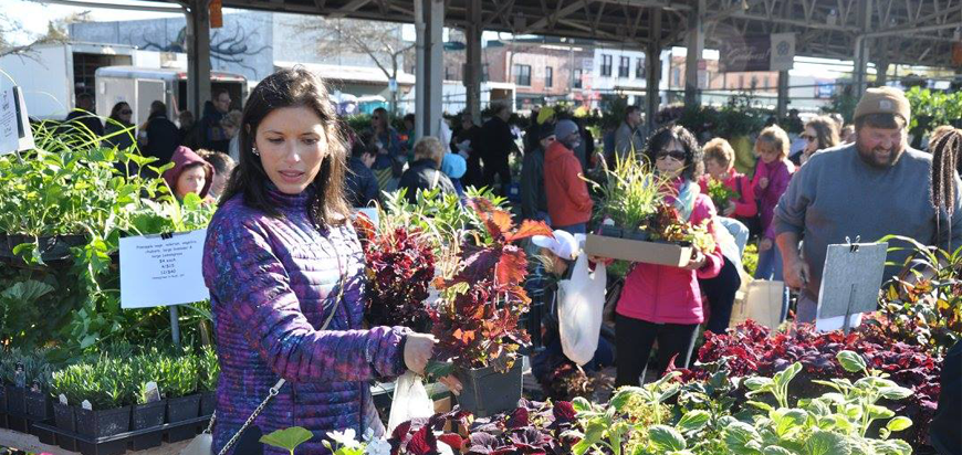 Shopping for Plants at Rochester Public Market