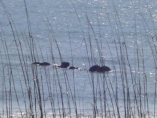General Beauregard shipwreck remains off Carolina Beach