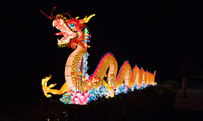 North Carolina Chinese Lantern Festival Dragon