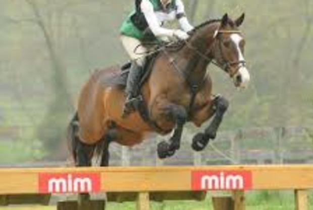 Allan & Clover Sport Horses