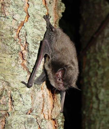 Learn all about bats at Williams Park in Brownsburg on Saturday.