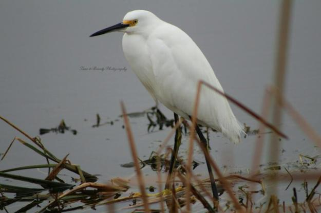 Snowy Egret Creole Nature Trail Photo Story | Time and Beauty Photography