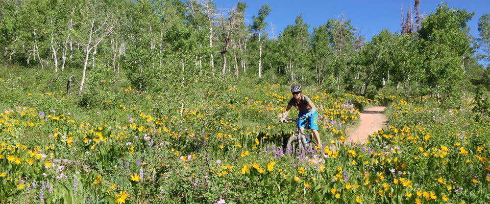 Mountain Biking on Spring Creek Trail Steamboat Springs, Colorado