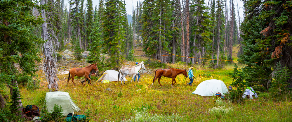 Backpacking with horses outside of Steamboat Springs
