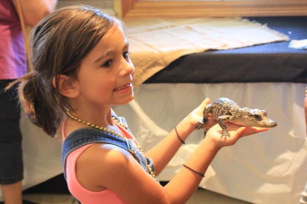 Baby Alligators at Adventure Point | Sulphur, LA
