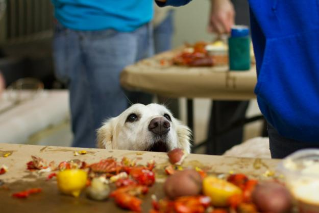 Dog and Crawfish | Lake Charles, LA
