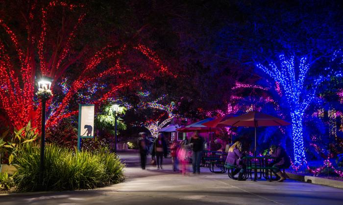 Houston Zoo Lights at Christmas time