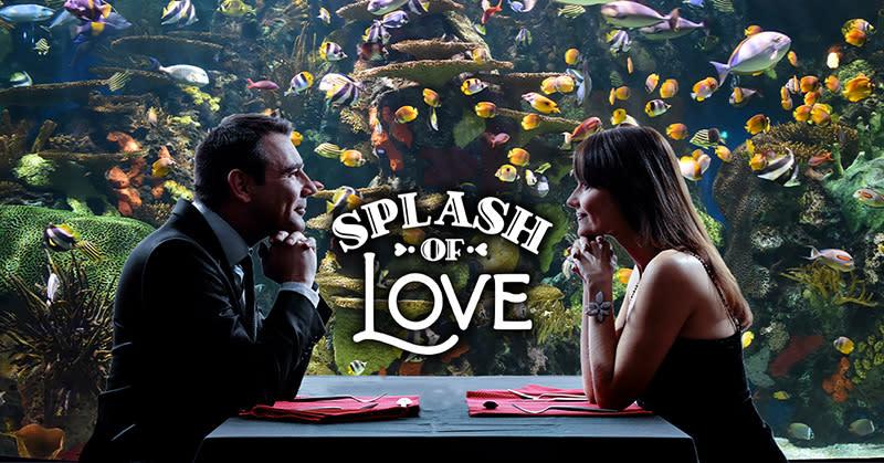 Ripley's Aquarium Splash of Love couple sitting in front of aquarium