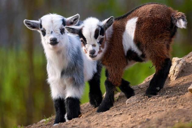 Barnstable Farm & Pet logo.png