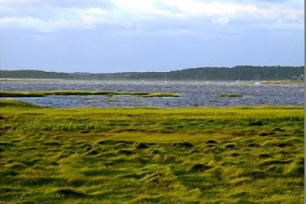 great marsh kayak tours 2.jpg
