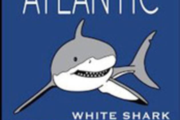 shark_0.jpg