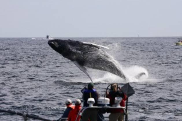 WalkerTours-whalebreach