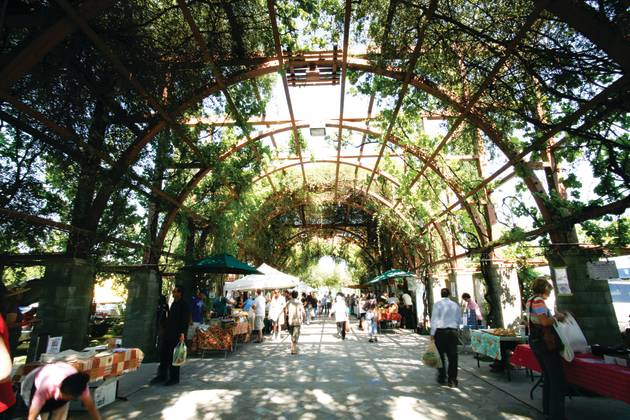 The Vineyard Farmers Market