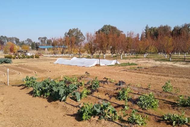 Moa Oasis Garden