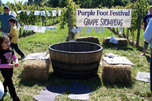 purple foot festival grape stomping