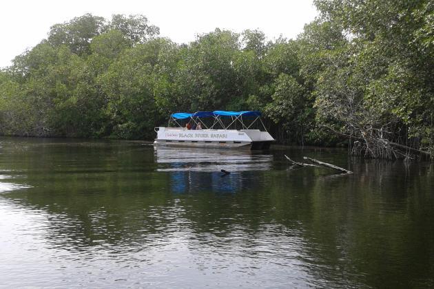 SNL Black River Safari