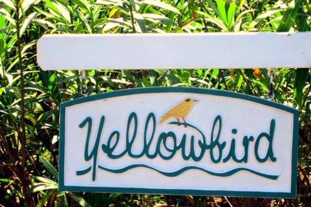 Yellowbird at Tryall