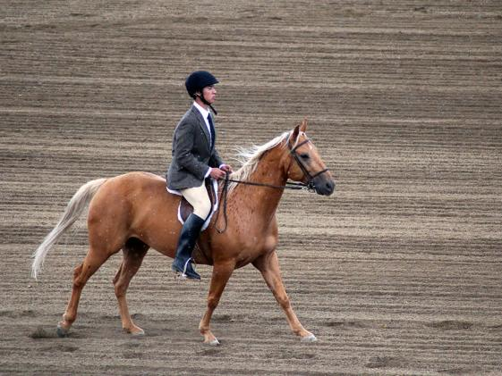 Horse & Equine Events