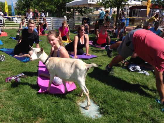 Fitness Event - Goat Yoga