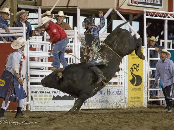 Rodeo Event - Bull Riding